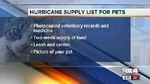 How to protect your pets during hurricane season