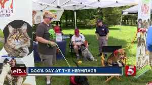 News video: Hundreds Have Fun Under The Sun With Their Dogs