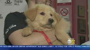 News video: Dogs, Cats Up For Adoption In Westchester