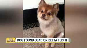 Dog found dead after cross-country flight [Video]