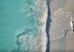 News video: Rotting Whale Carcass Attracts Attention of Hungry Great White Shark
