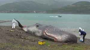Beached 'whale' fools local residents in the French Alps