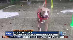 News video: Good morning from Roxy and the Maryland SPCA!