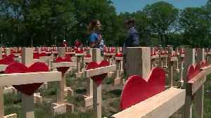 News video: More Than 500 Crosses on Display in Chicago's Grant Park for Murder Victims