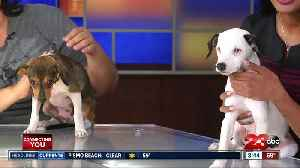 News video: 23ABC Pet of the Week: Double dose of puppy love with Brown Baron and Snoopy!