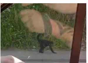 Spider Monkey Dies After Escaping From Belfast Zoo