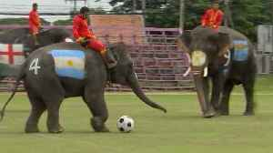 Soccer elephants beat humans 2-1 as Thailand looks to stamp out illegal gambling