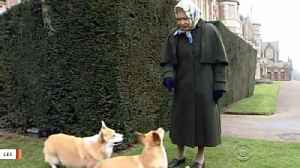 News video: British Royal Family's Newest Canine Addition Is Neither A Corgi Nor From The UK