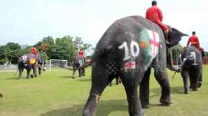 England's penalty curse continues as Thai elephants kick off anti-gambling campaign