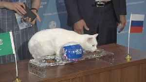 News video: Russia takes the biscuit as oracle cat predicts the World Cup hosts will beat Saudi Arabia