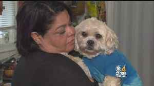 News video: Man Suspected Of Stealing Woman's Dog Arrested After Methuen Standoff