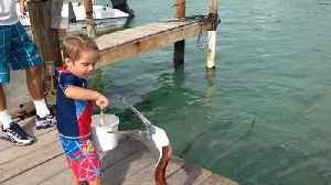 Tot Boy Freaks Out When A Pelican Takes A Fish From His Hand [Video]