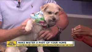 News video: Pet of the week: Mister is a loving 6-year-old Yorkie/Lhasa Apso mix who wants play fetch and cuddle