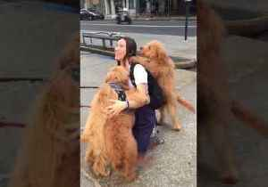 News video: Extremely Happy Woman Is Bombarded by Goldendoodles