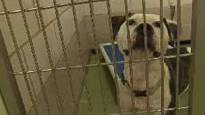News video: County animal shelter to reopen on Saturday