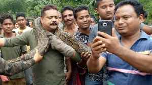 News video: Selfie mania: forest ranger's narrow escape as 35ft python tries to crush neck while posing for selfies