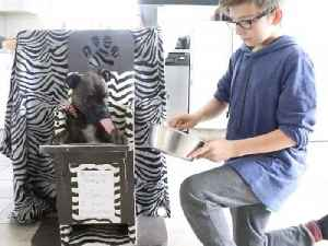 News video: Doggie high chairs saving thousands of lives a year designed, created and shipped for free by husband and wife in garage