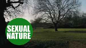 News video: Watching Sir David Attenborough's nature programmes could boost your sex life