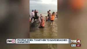 News video: Strangers gather for Manatee Rescue