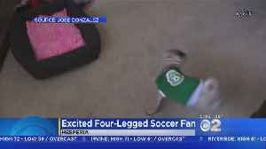 News video: Pug Spins In Ecstatic Circles After Mexico's World Cup Win