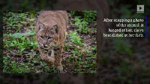 News video: Woman Kills Bobcat With Her Bare Hands