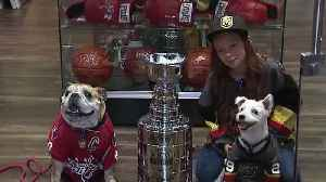 Bark-Andre Furry, Ovie the Bulldog meet in Las Vegas