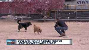 Dogs and health: A lower risk for heart disease-related death?