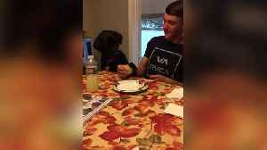 Funny Dog Wants A Bite Of A Sandwich