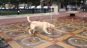 A Funny Dog Plays With A Water Fountain