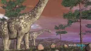 Top 10 Awesome Dinosaurs You've Never Heard of [Video]