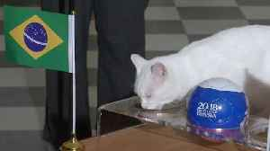 A pawsitive win for Brazil - Achilles the oracle cat predicts again [Video]