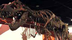 Science Says T. Rex Couldn't Stick Out Its Tongue