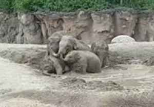 Elephants at Dublin Zoo Get Ready to Beat the Heat With a Pool Party