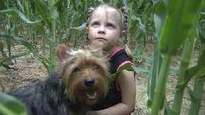 Yorkie Keeps 3-Year-Old Safe After Getting Lost in Missouri Cornfield Overnight