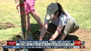 Tehachapi High School plants new trees after vandalism