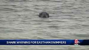 Cape swimmers pulled out of water after blood seen in water