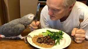 Parrot and owner share meal and special bond
