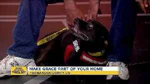 Rescues in Action June 23 | Grace needs furever home