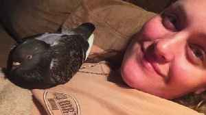 News video: Woman Desperately Searching for Missing Emotional Support Pigeon