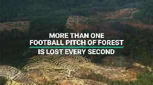 More Than One Football Pitch Of Forest Is Lost Every Second [Video]