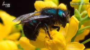 Climate Change May Be Wiping Out Earth's Bees [Video]