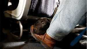 Emotional-Support Animals Are On The Rise, But Airlines Want Them Gone [Video]