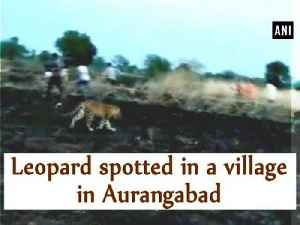 Leopard spotted in a village in Aurangabad [Video]