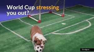 Beat your World Cup stress with 'puppy cam' [Video]