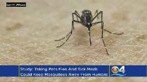 Study: Taking Cat, Dog Flea Drugs Could Protect Humans Against Mosquitoes [Video]