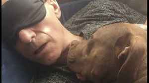 Sir Patrick Stewart Fell in Love with His Rescue Dog [Video]