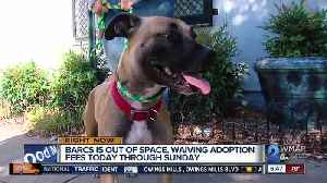 BARCS to waive adoption fees over weekend [Video]