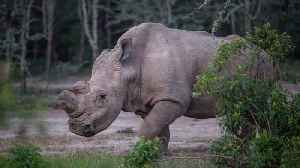 Scientists Create The World's First Test-Tube Rhino Embryos [Video]