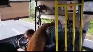 Driver gets clobbered by elephant's trunk as it steals bananas from bus [Video]
