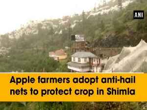 Apple farmers adopt anti-hail nets to protect crop in Shimla [Video]